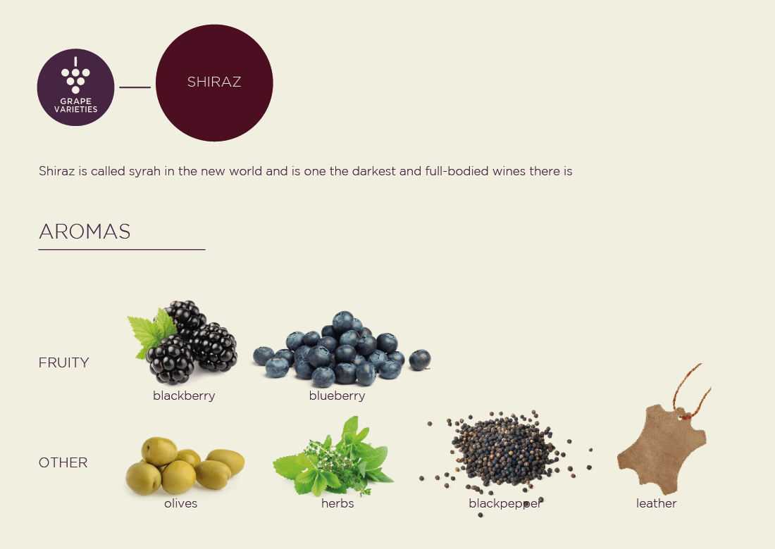syrah / shiraz grape variety highlight