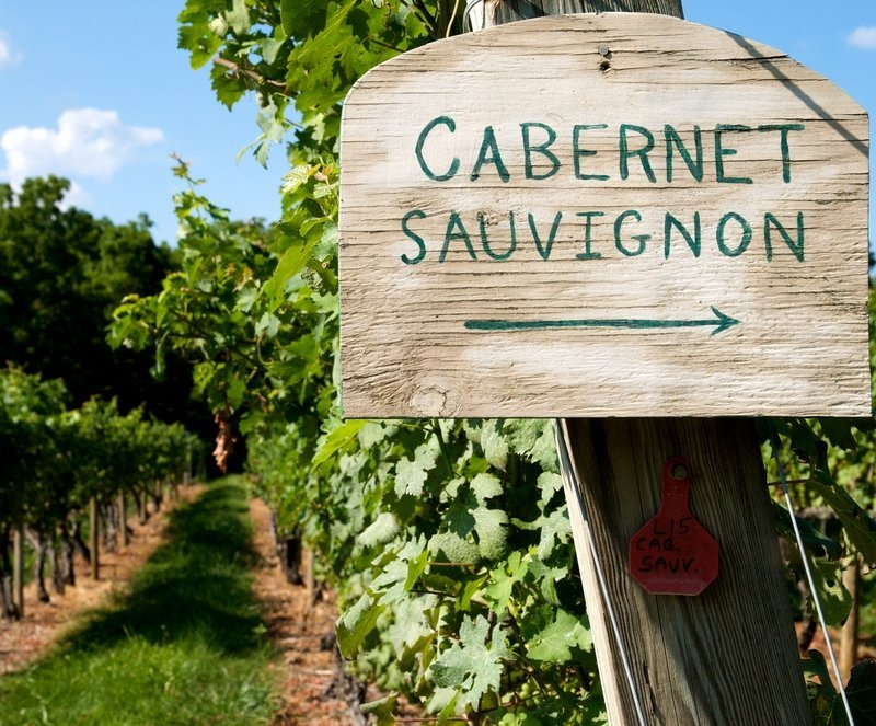 guide to Cabernet Sauvignon