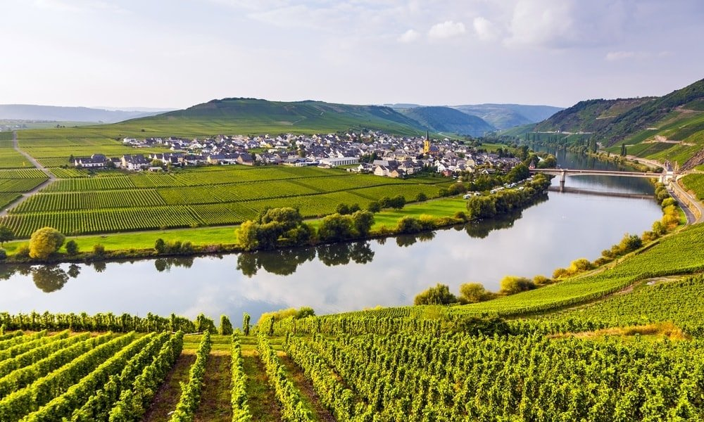 riesling guide