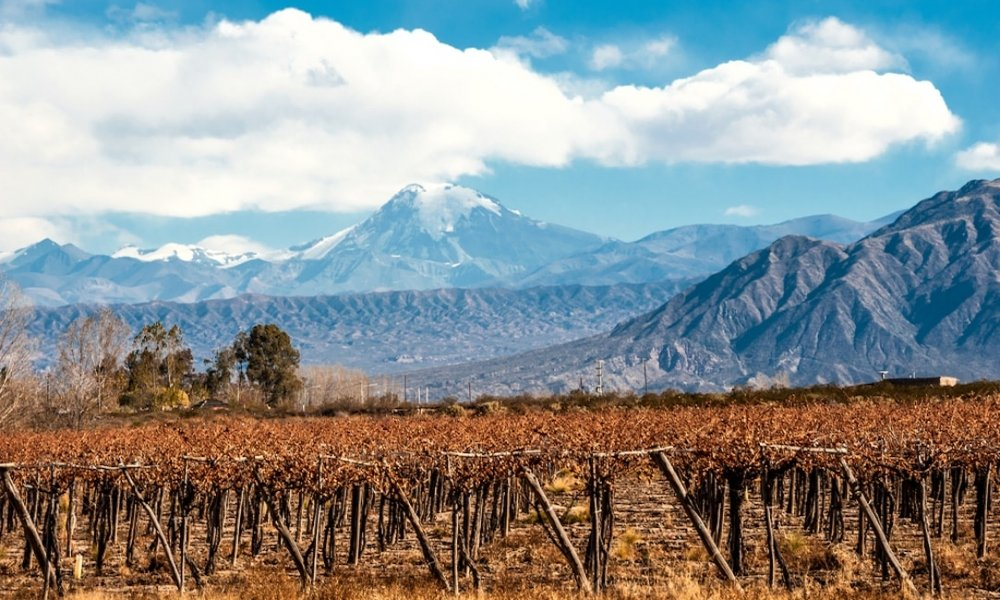 Mendoza Wine Guide