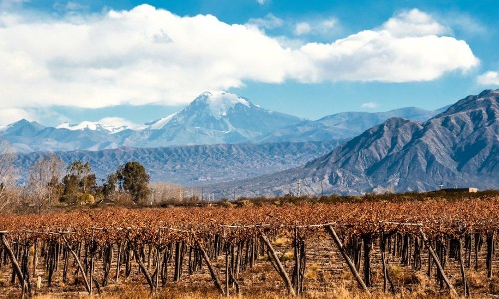 Mendoza Wine Guide