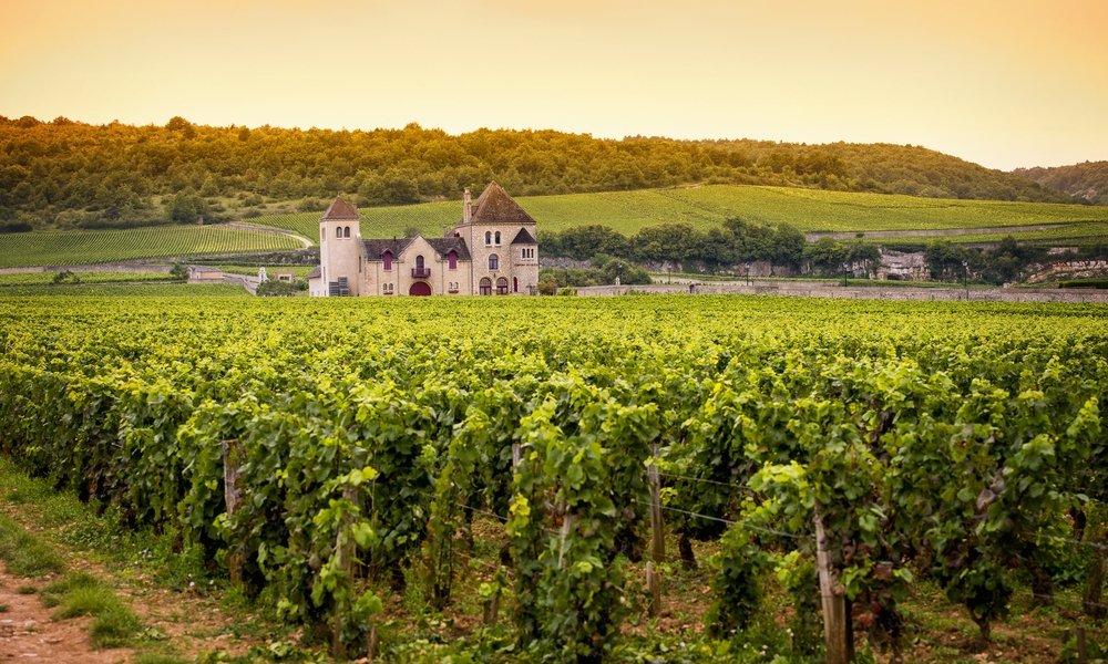 wine guide aligote