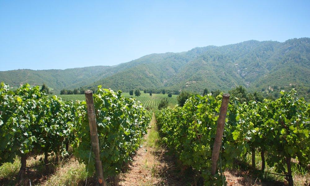 Carmenere grape guide
