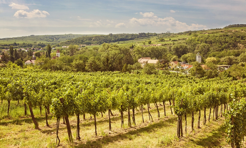 Kamptal Vineyards