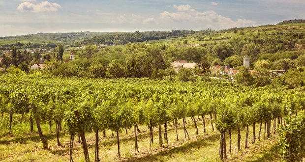 Kamptal Vineyards