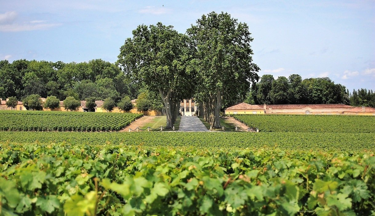 bordeaux vineyard medoc