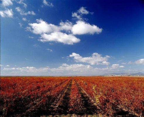 tempranillo vineyard