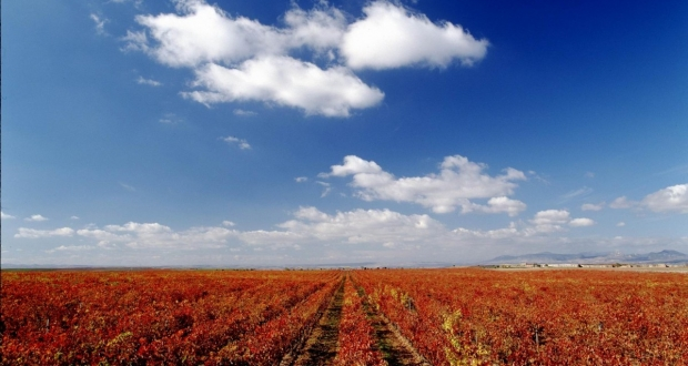 tempranillo vineyard