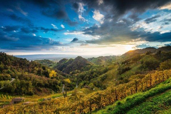 prosecco wine guide